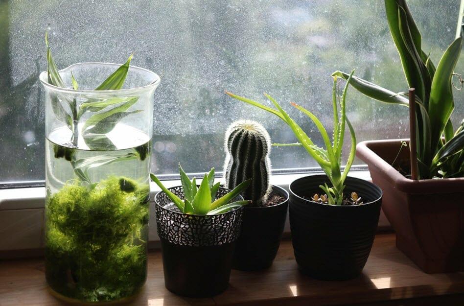 Zimmerpflanzen im Winter richtig pflegt